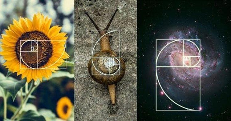 Nature golden ratio