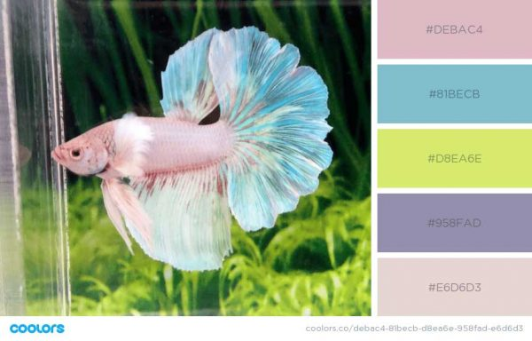 Pastel in Nature